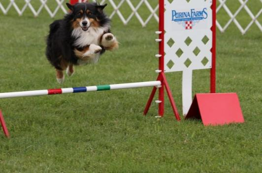 Doc in Agility Jumpers